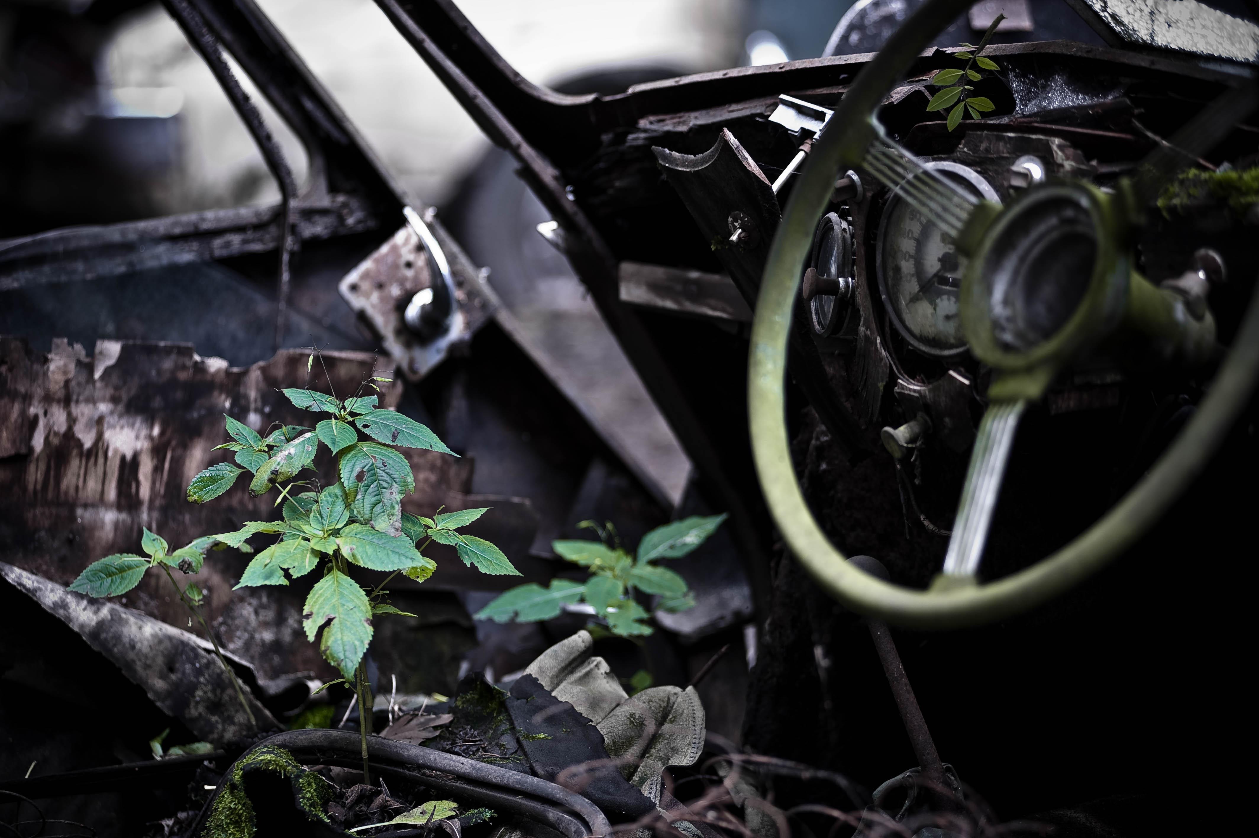 Autofriedhof-10