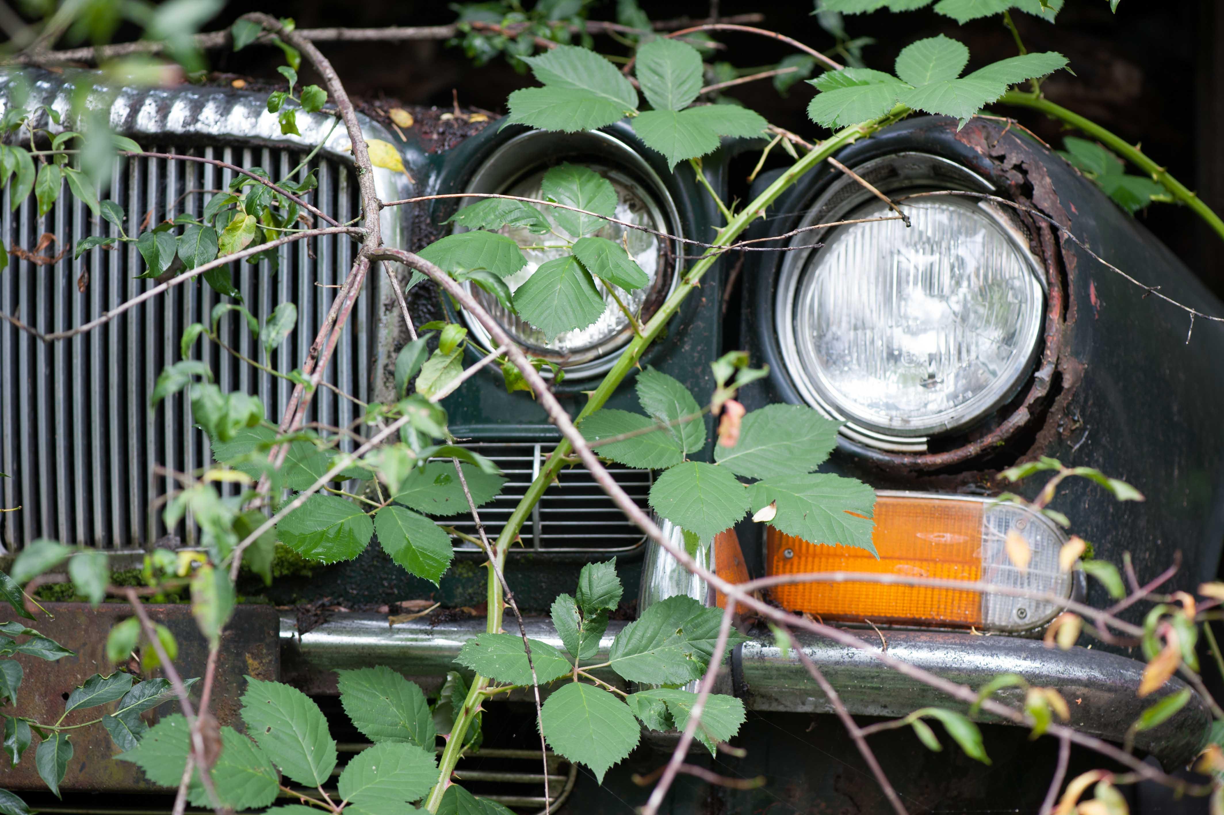 Autofriedhof-7