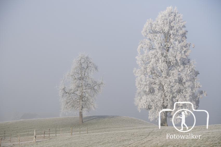 Nebel-6
